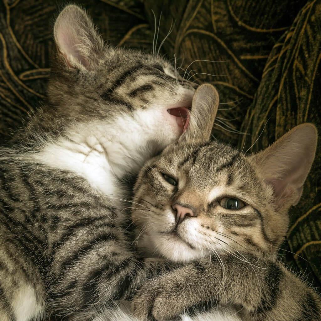 katten die knuffelen